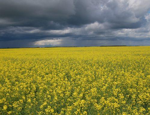Ecologie en technologie zijn de pijlers van duurzame landbouw
